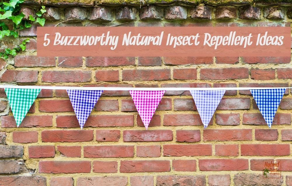 How to get rid of roaches for good natural insect
