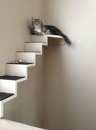 Exceptionnel DIY Cat Staircase Wall   PetDIYs.com