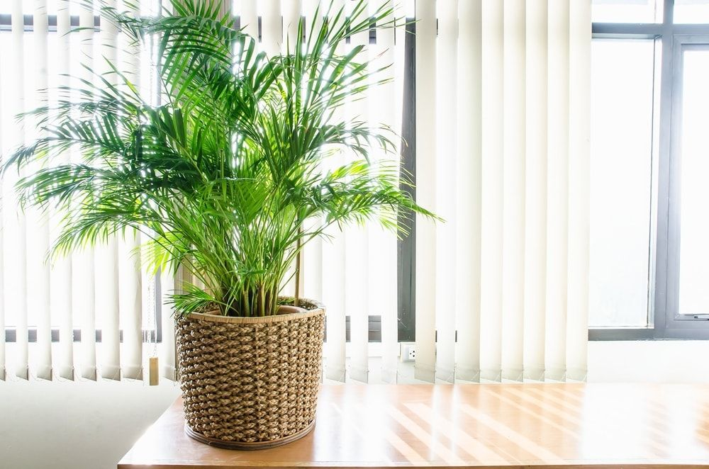 8 Houseplants That Help Lower Indoor Humidity (Natural