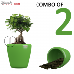 Green combo self watering planters in just Rs. 1299, for more great deals visit our online store.