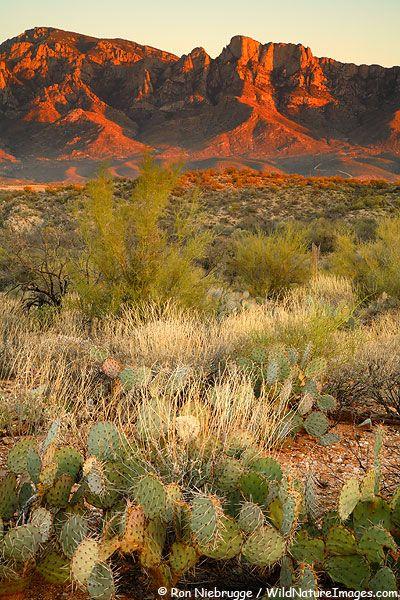 Coronado National Forest Photos Arizona Landscape Tucson Arizona National Forest
