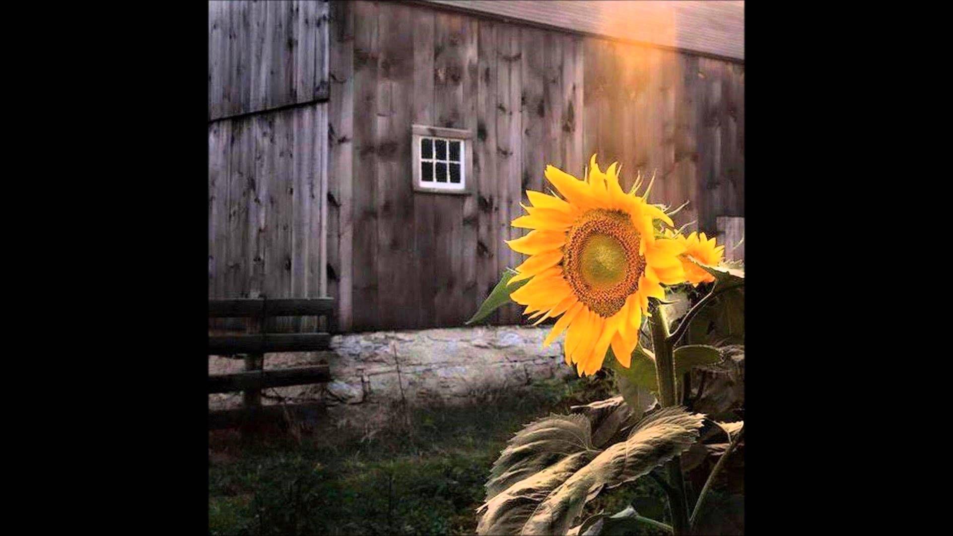 Unending Love By Tagore Urdu Hindi Pod Cast نا تمام محبت Sunflower Art Sunflower Pictures Sunflower