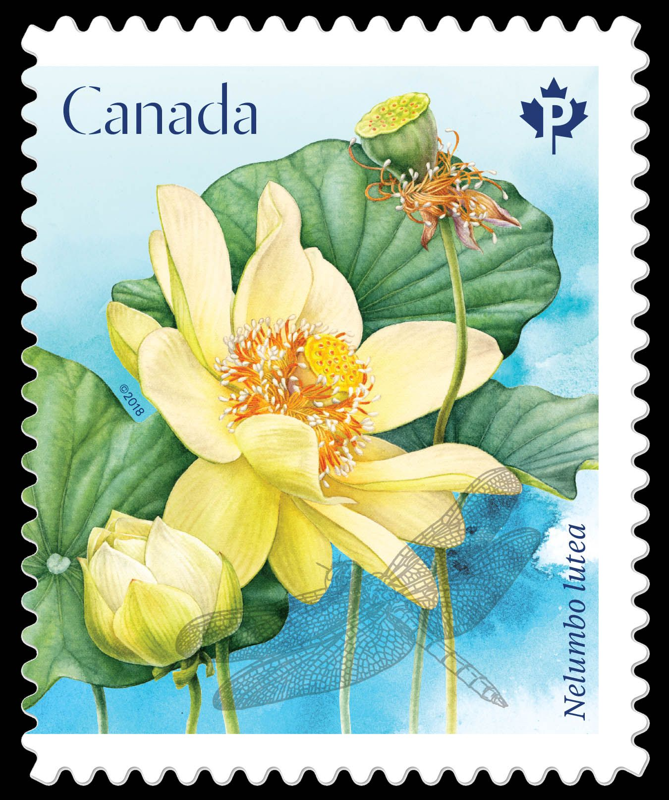 Canada 2018 Lotusblume Flower stamp, Stamp, Postage stamps
