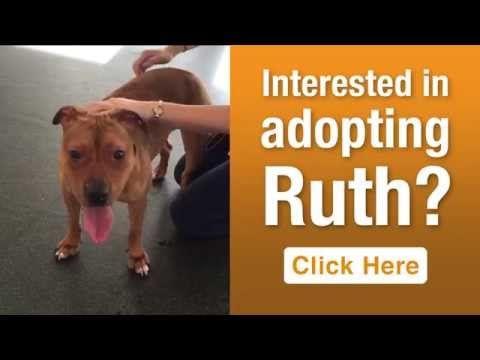 ASPCA Pet of the Week: Ruth | ASPCA