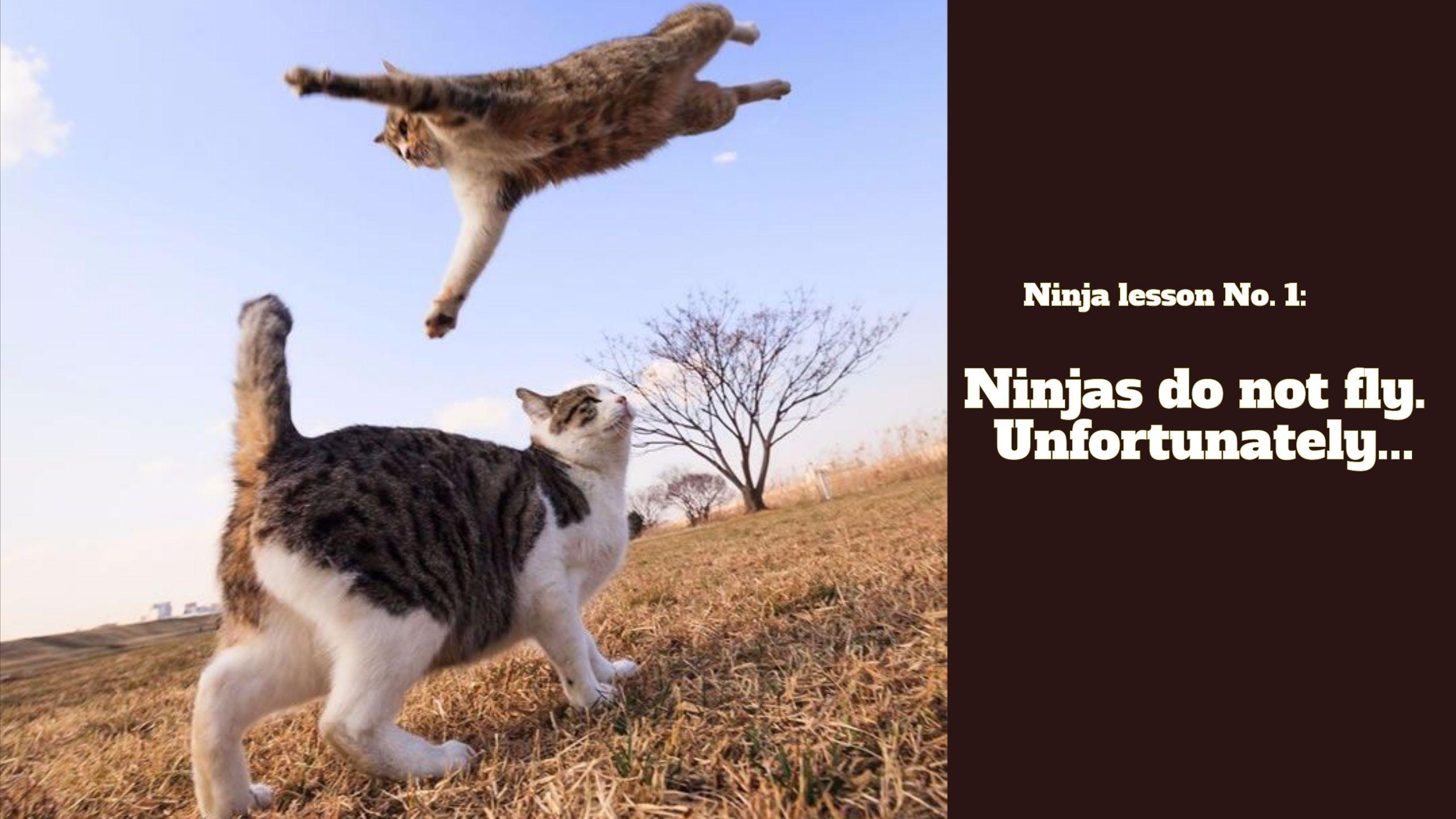 Https Www Youtube Com Watch V I9cdnc48qde Funny Cat Videos Funny Cat Memes Cat Memes