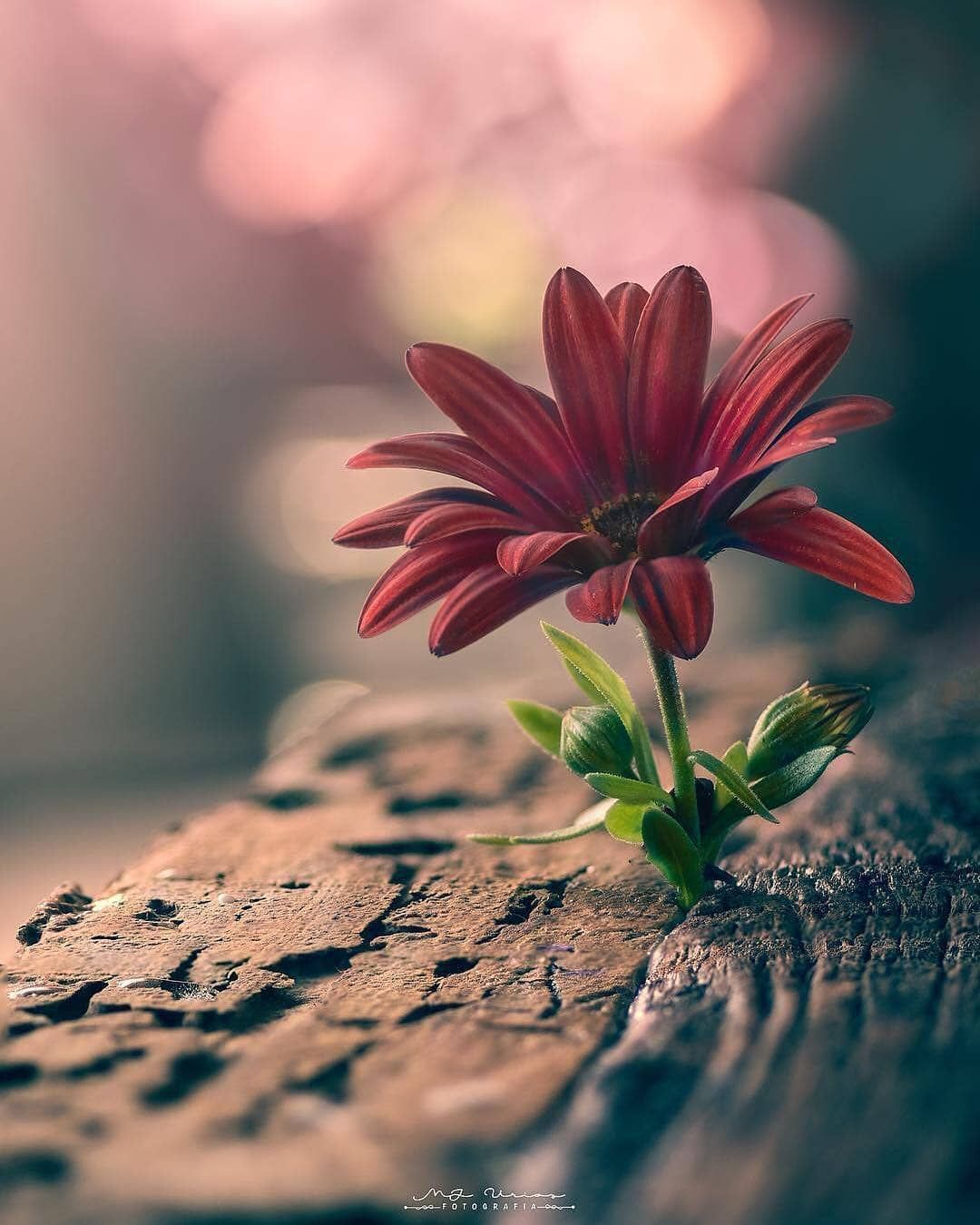 Nature Photobook On Instagram What S Meant To Be Will Always Finds Its Way Today S Beautiful Nature Wallpaper Beautiful Flowers Wallpapers Nature