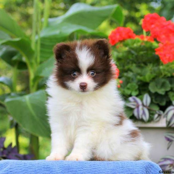 Wonderful Spherical Chubby Adorable Dog - bba42652dc3ad0b3587fe9fe0280cab7  HD_921827  .jpg