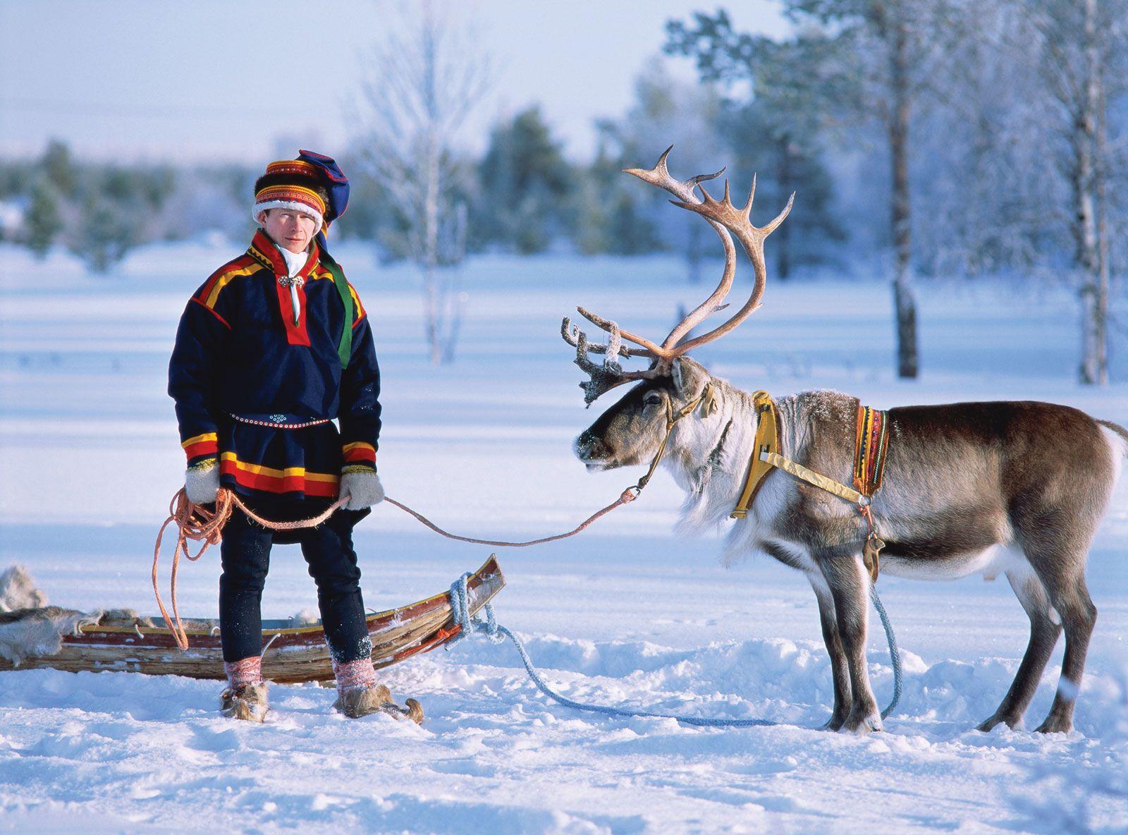 Photo: Reindeer waiting Santa Claus in Finnish Lapland – Reindeer ...
