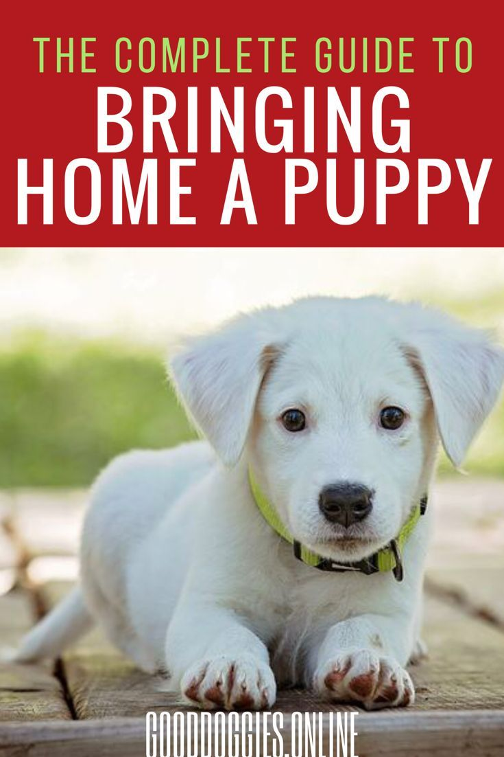 Tips On What To Do When Bringing A Puppy Home Training Your