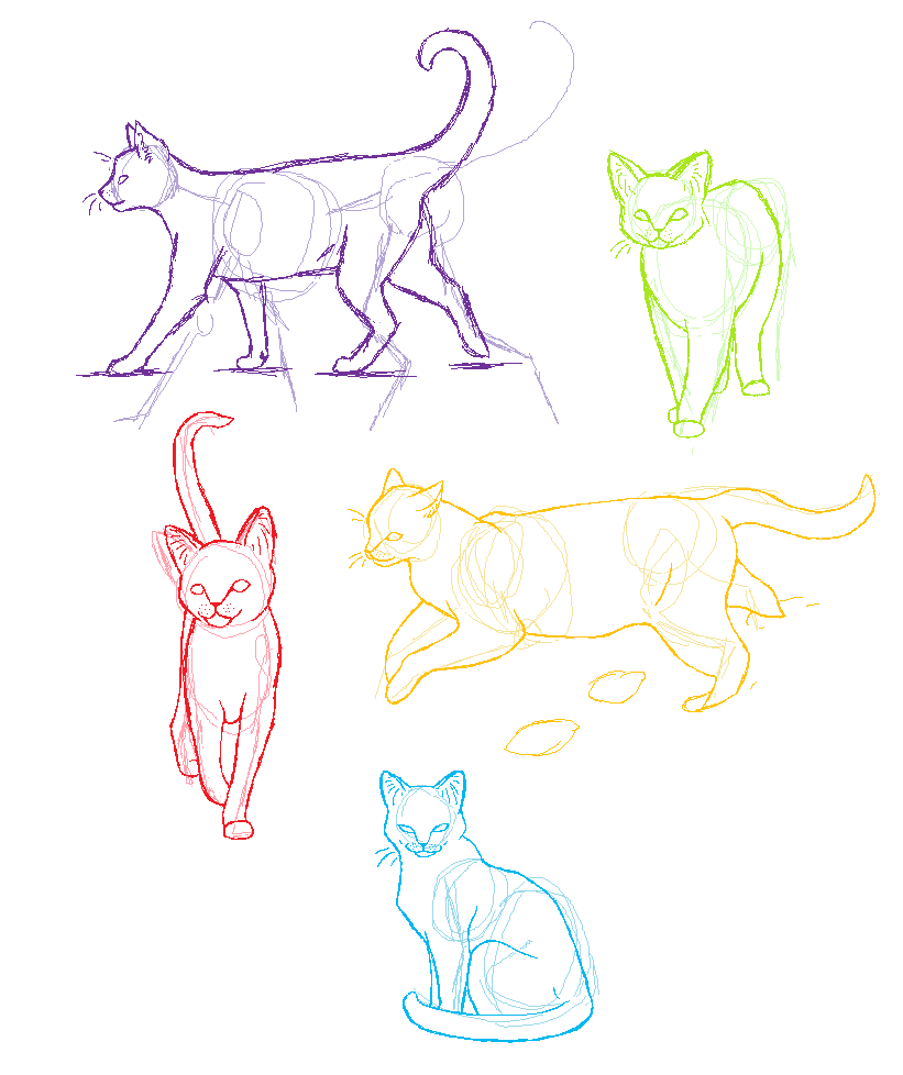 Anatomy practice- Cats by candracar272.deviantart.com on @deviantART ...