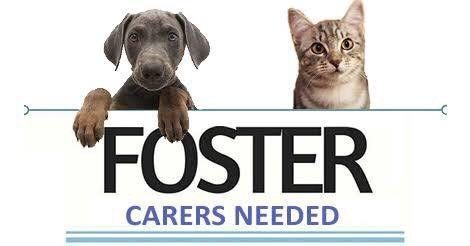 Foster carers needed urgently Dogs & Puppies Gumtree