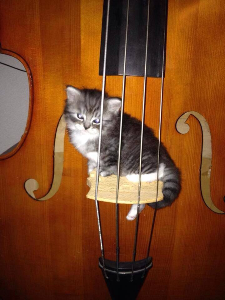 Kitty plays bass | Baby cats, Beautiful cats