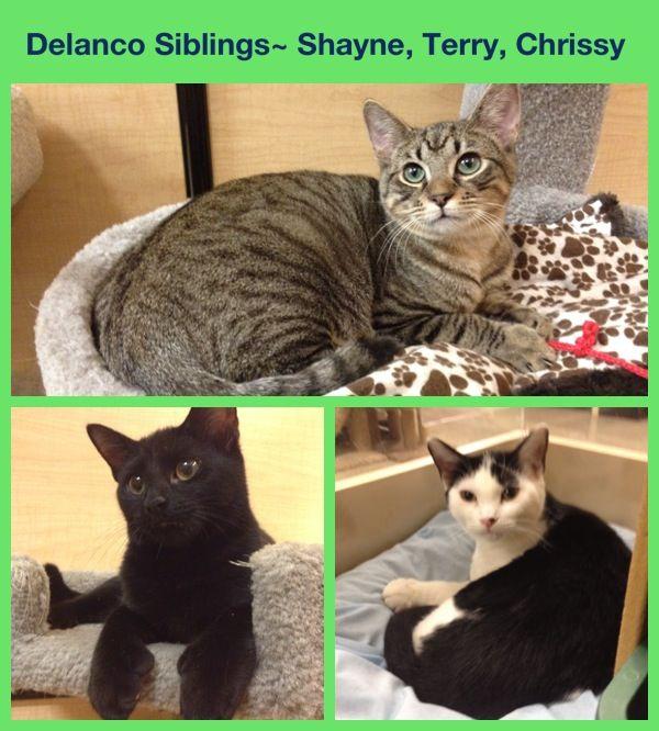 Cats Available For Adoption At Petsmart Delran Nj 08075 Cat Adoption Cats Petsmart