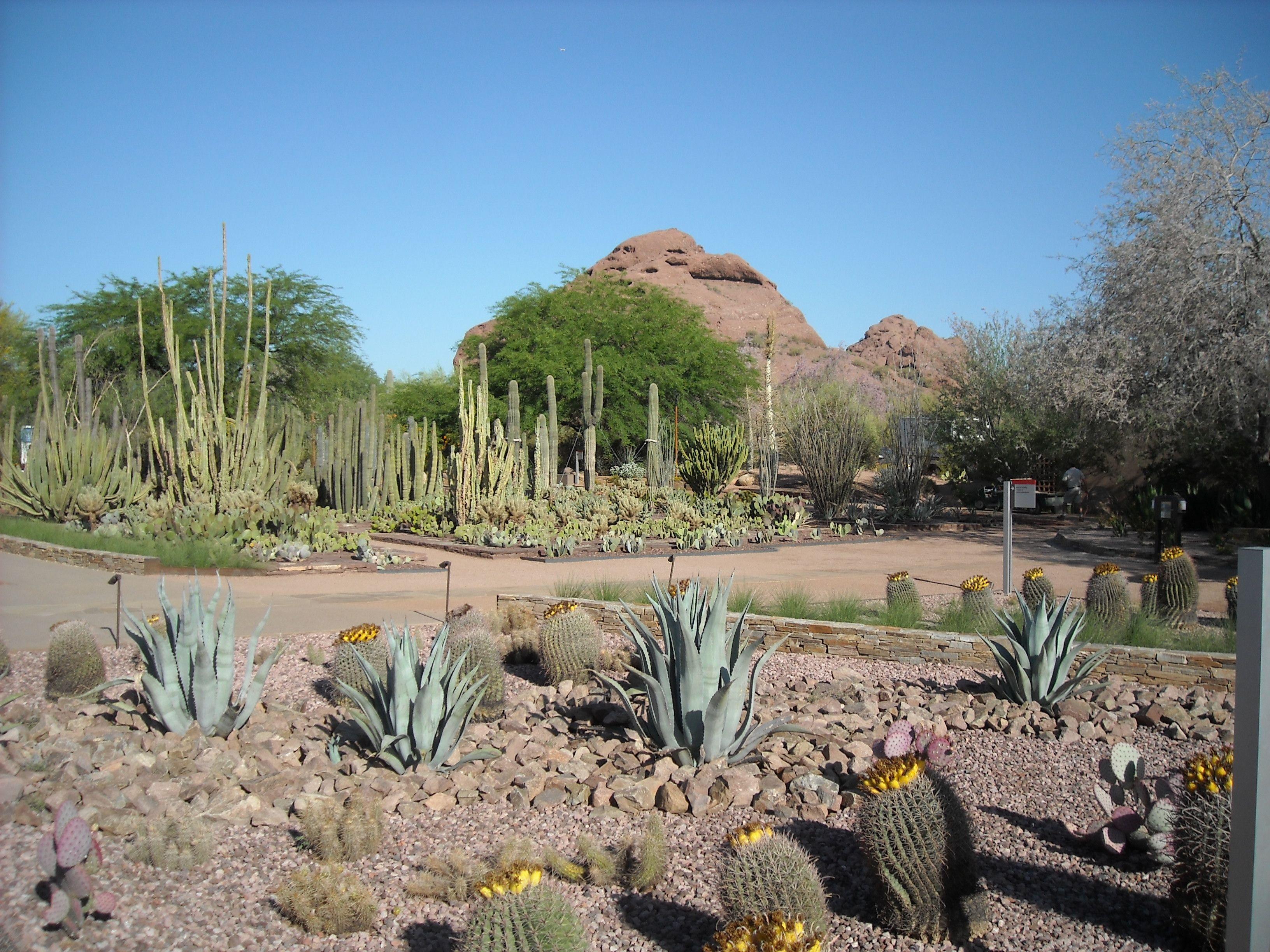Botanical Gardens Phoenix Az Arizona Pinterest