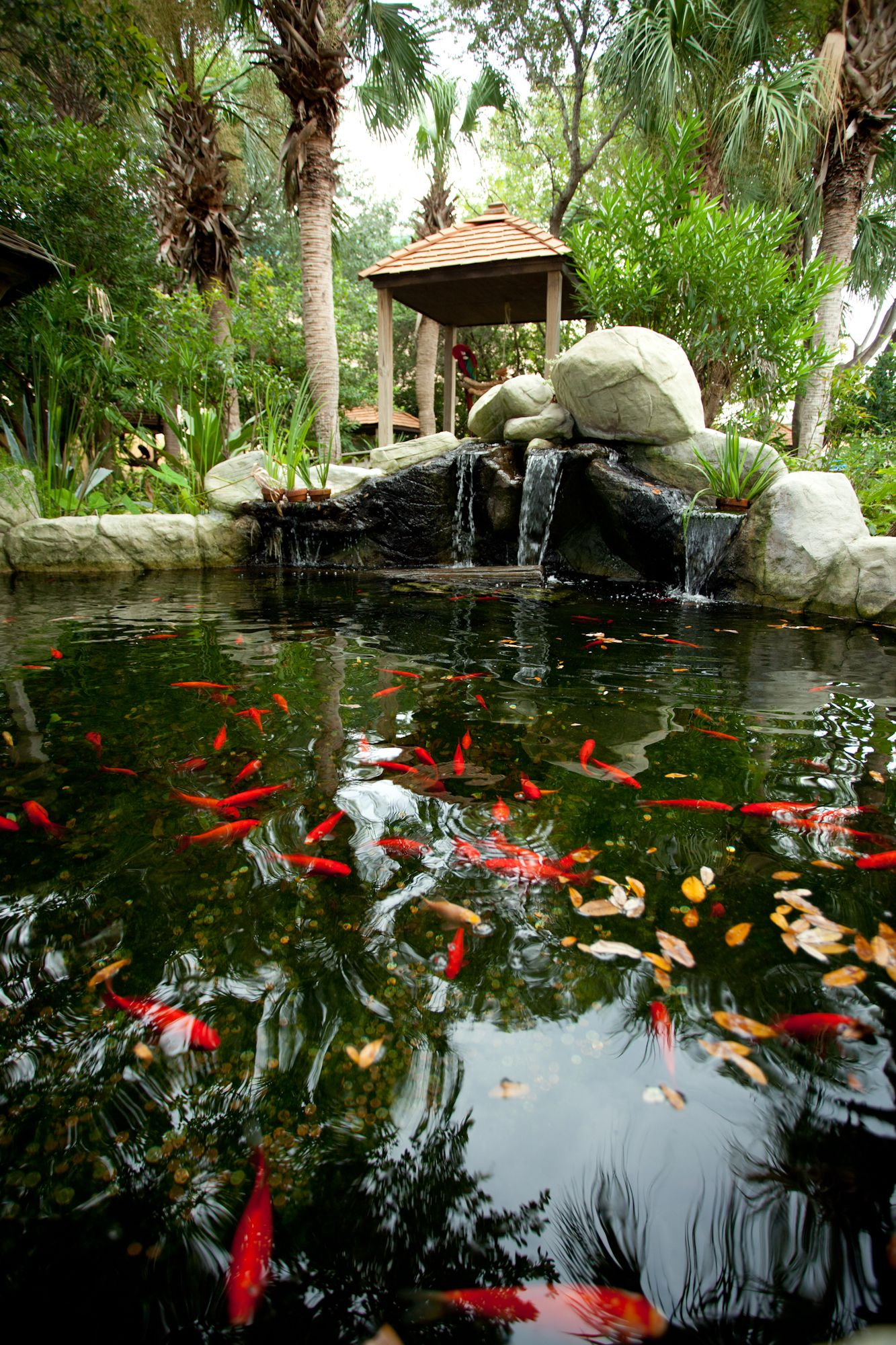 Goldfish pond at gulf world photo by lydia squire for Garden pond design books