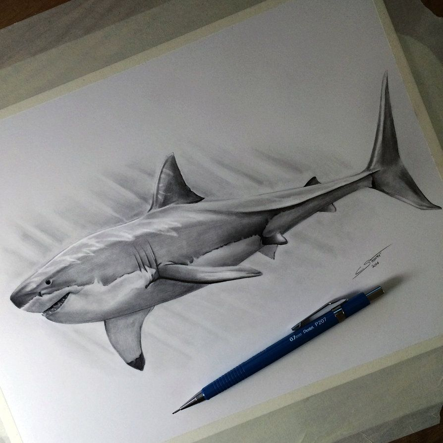 how to draw a 3d great white shark
