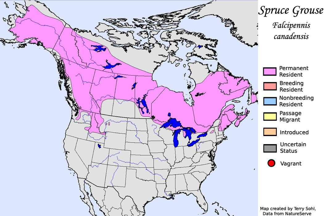 Spruce Grouse - North American Range Map | Great grey owl ...