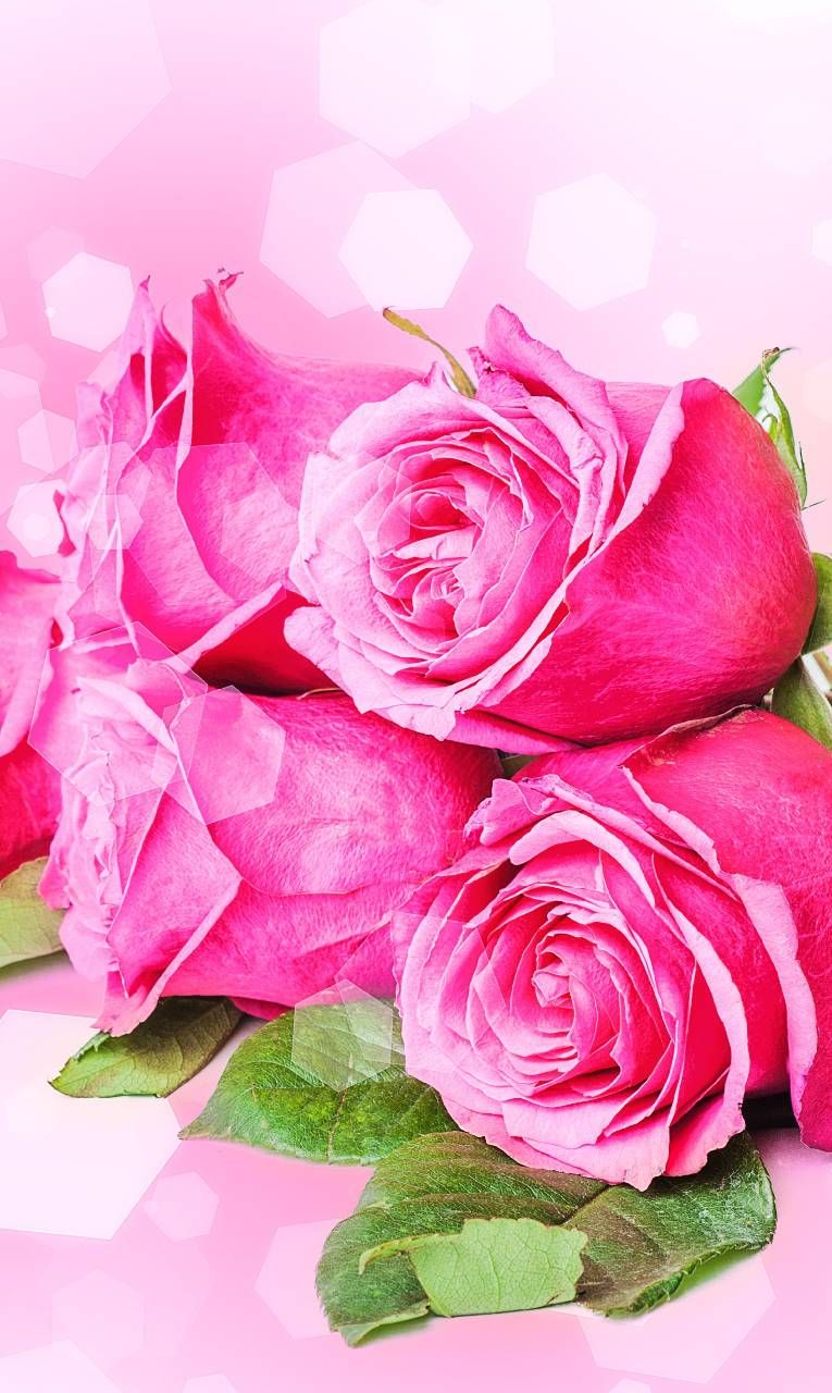 Download Pink Roses Wallpaper by ____S 19 Free on