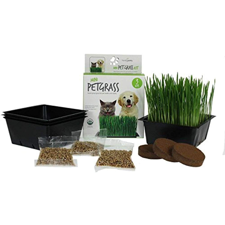 Wheatgrass Kits Mini Organic Pet Grass Kit Grow