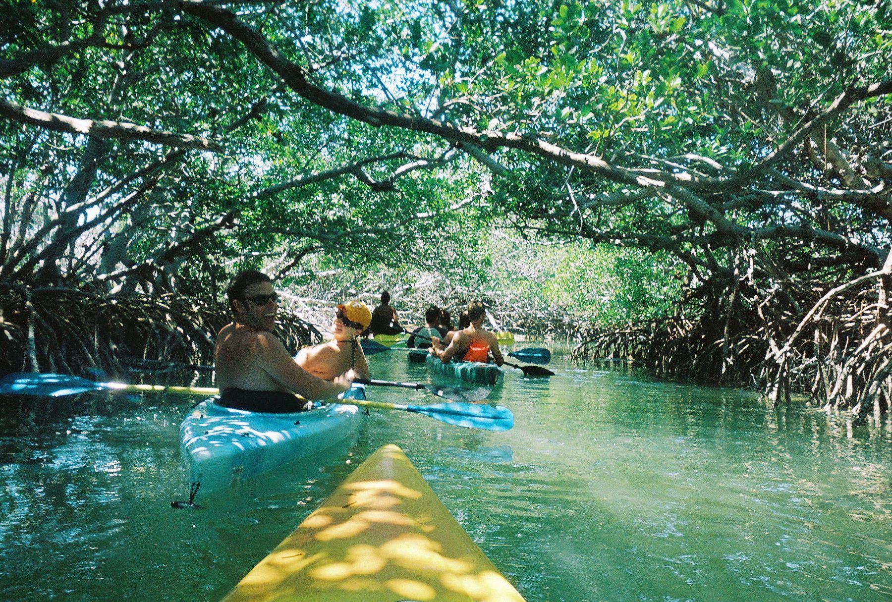 kayaking through mangrove trees key west fl very cool will