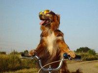 Hond met humor, hoe maak ik leuke foto's van mijn hond? | Hobby en Overige: Fotografie