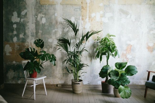 stylische zimmerpflanzen f rs b ro houseplants galore pinterest plants indoor plants and. Black Bedroom Furniture Sets. Home Design Ideas