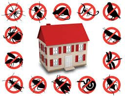 Are You Having A Pest Control Problem And You Are Simply Frustrated About The Situation Have You Hired Pest Control Serv Remedios Caseros Remedios Proyectos