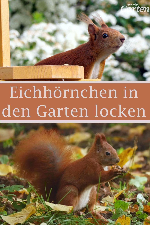 Eichhörnchen im Garten füttern