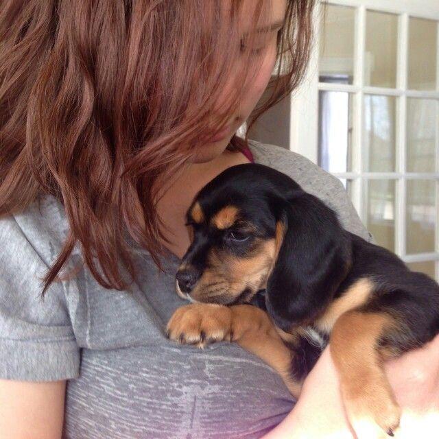 New Pup Beagle Cocker Spaniel Mix Puppy Named Lucy Cocker Spaniel Mix Puppy Names Beagle Mix