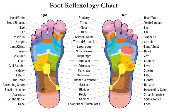 Top Best Foot Rollers for Plantar Fasciitis Reviews ...
