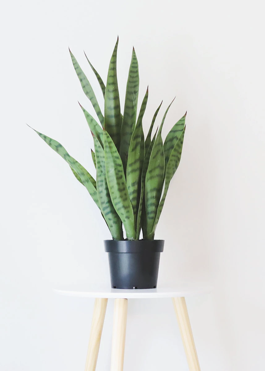 Variegated Green Snake Plant In Pot Artificial Plants Afloral Com Fake Potted Plants Fake Plants Decor Fake Plants