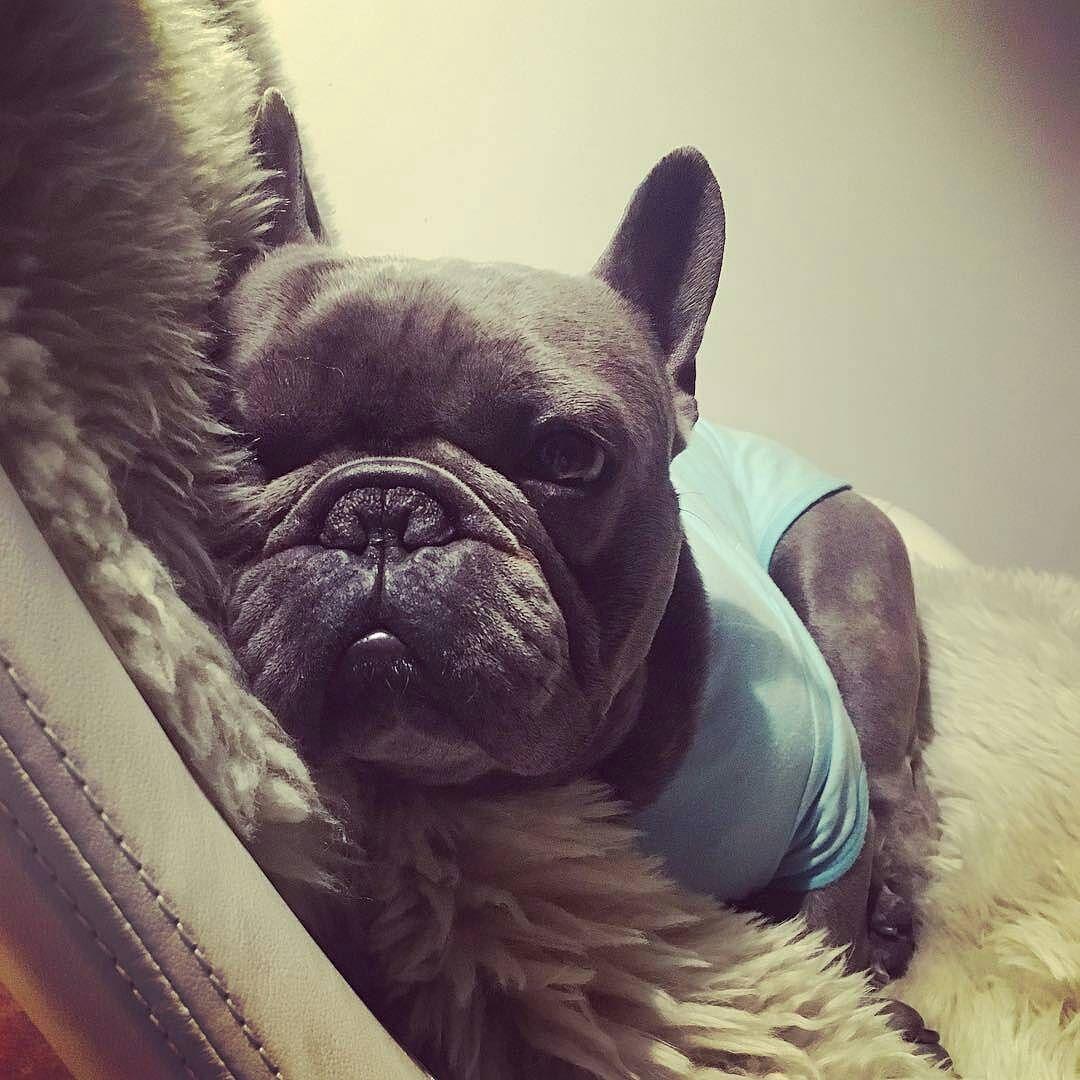 dog イヌ 犬可愛い画像まとめ http://ift.tt/1O6jMk4