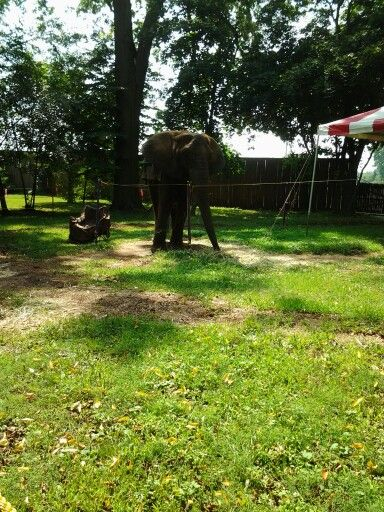 They offer elephant rides to at the Pennsylvania Renaissance Faire $8.00