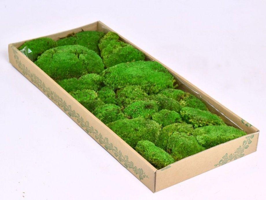 15x Eucalyptus Huis : Pin van nadine vermeer op home pinterest