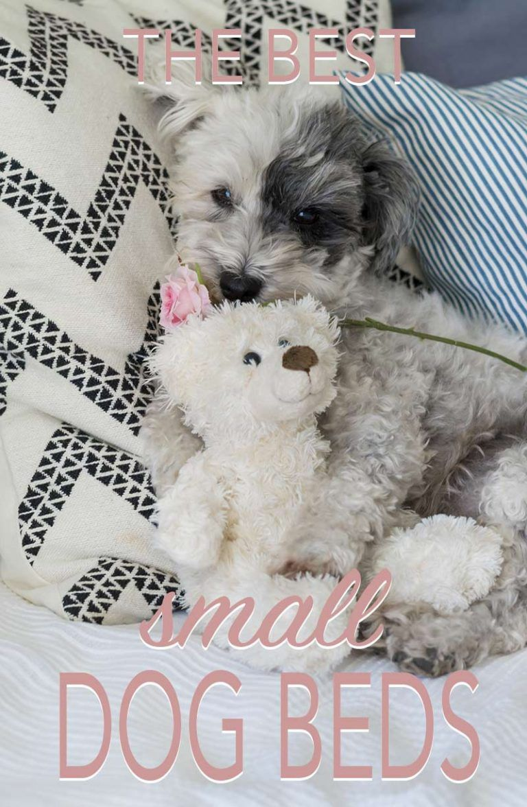 Best Small Dog Beds Reviews and tips for choosing the