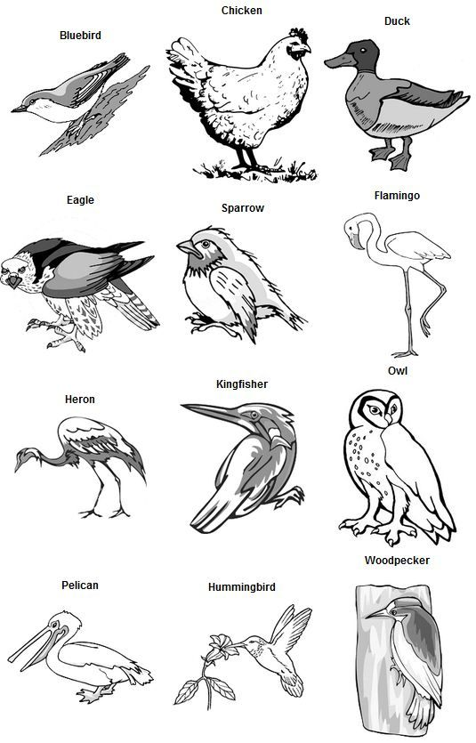 birds feet and beaks - key | WWS | Birds, Animal adaptations, Worksheets