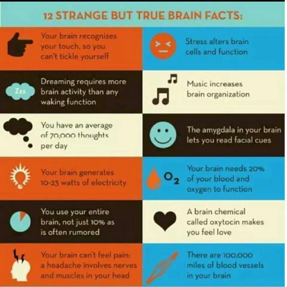 12 Strange But True Brain Facts Brain Facts Brain Activities