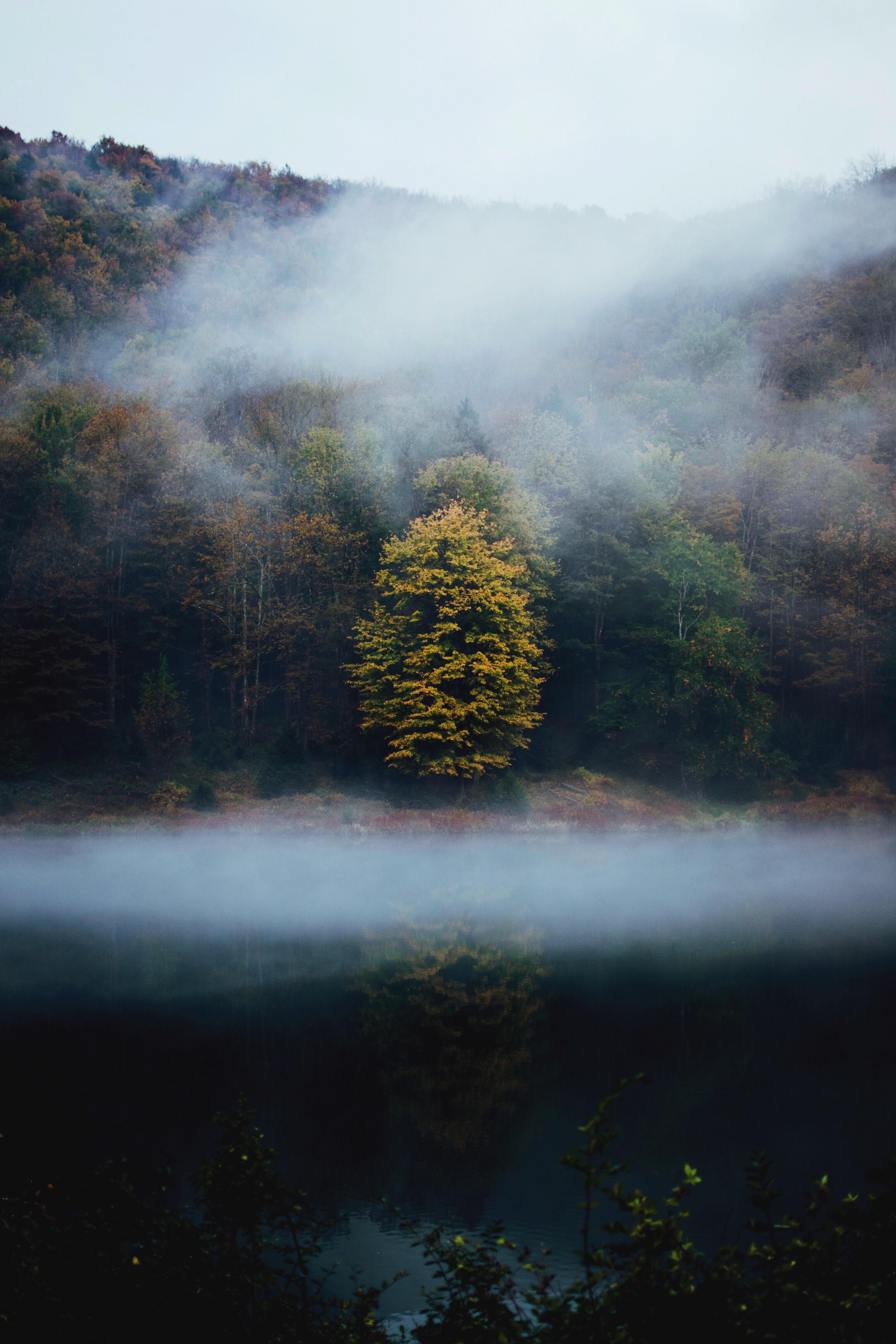 Itap of a tree in a foggy forest by kzarif photos