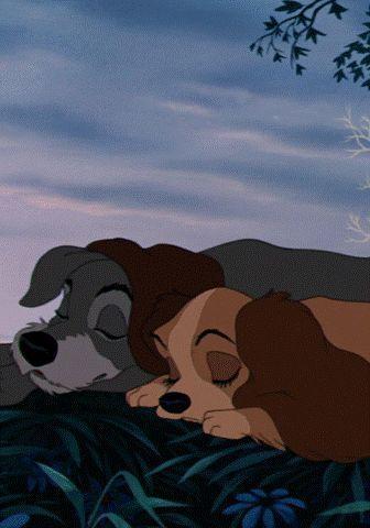 Photo of Disney, Lady und Tramp – #Disney #Lady #Tramp #und #honeymoon – Honey Moon Ideen