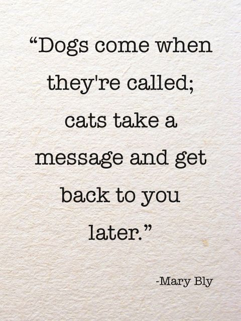 Dogs vs cats | Psycho quotes, Cat quotes, CatsQuotes About Cats Tumblr