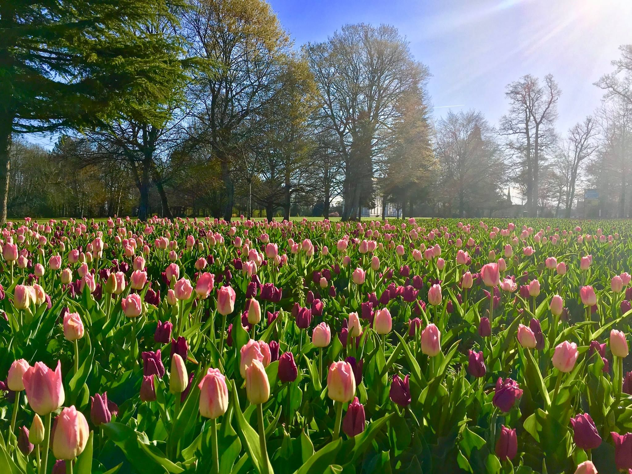 Un incontournable au printemps: découvrir les 120 000 ...