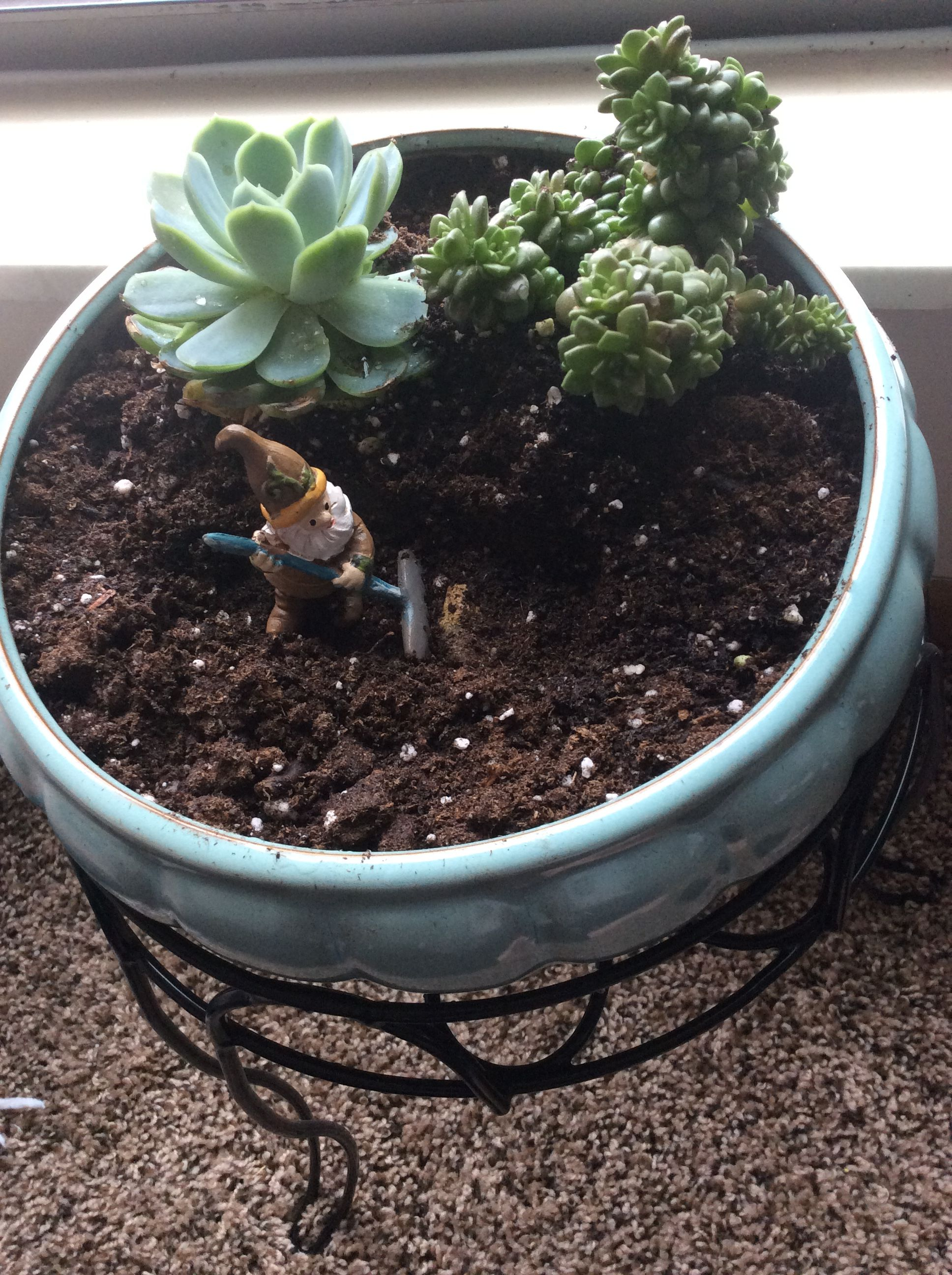 My new succulent garden