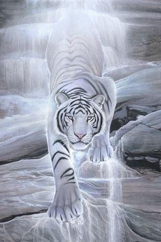 Wallpaper Macan Putih 3d