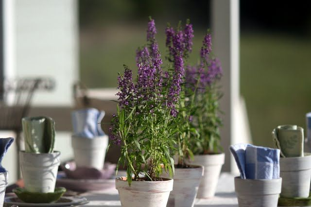 Potted Lilac