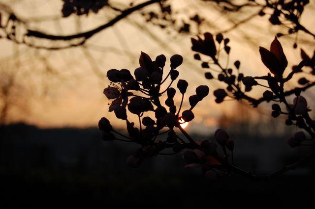 sunset flower shadow