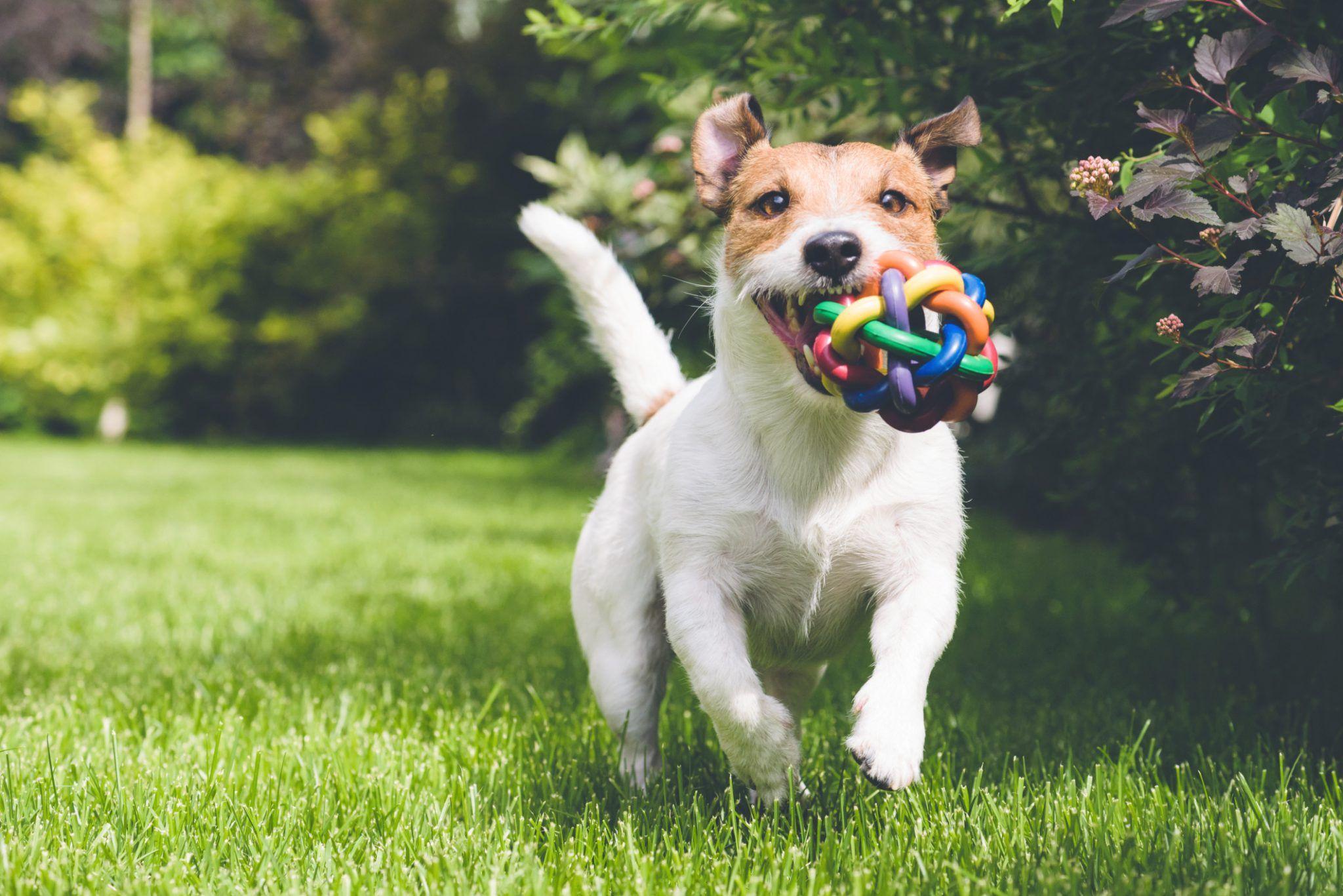 Best Wireless Dog Fence Batteries Aside From Choosing The Best