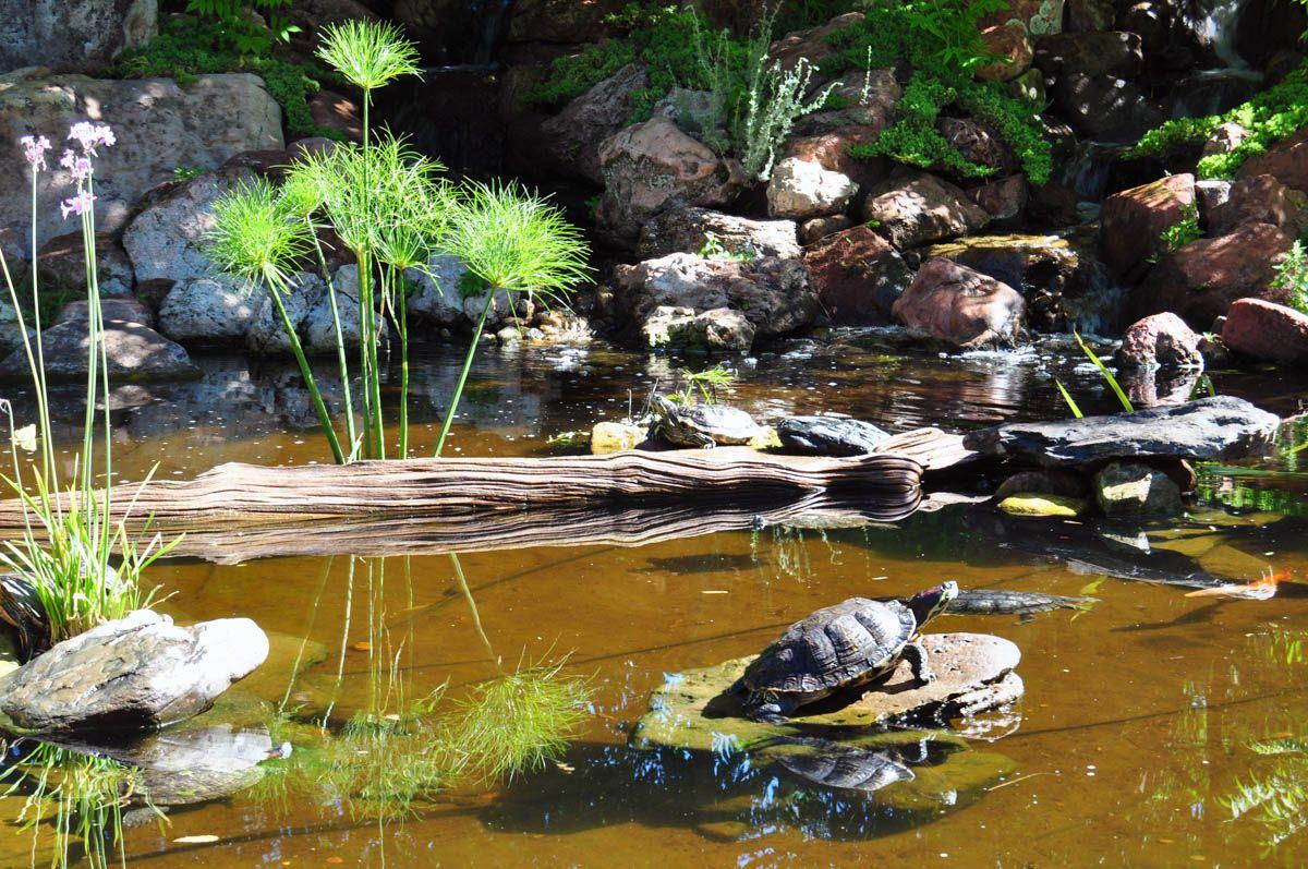 Turtle Pond at Tortuga Falls   Turtle pond, Pond, Turtle