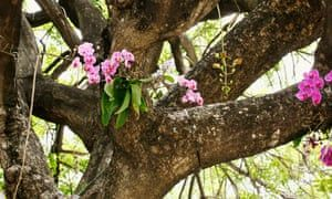 How to grow orchids #growingorchids
