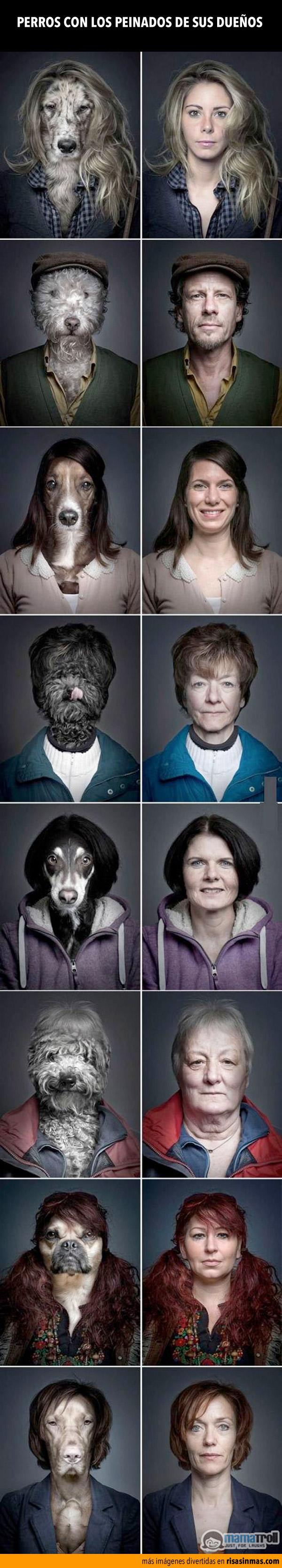 Perros con los peinados de sus dueños.