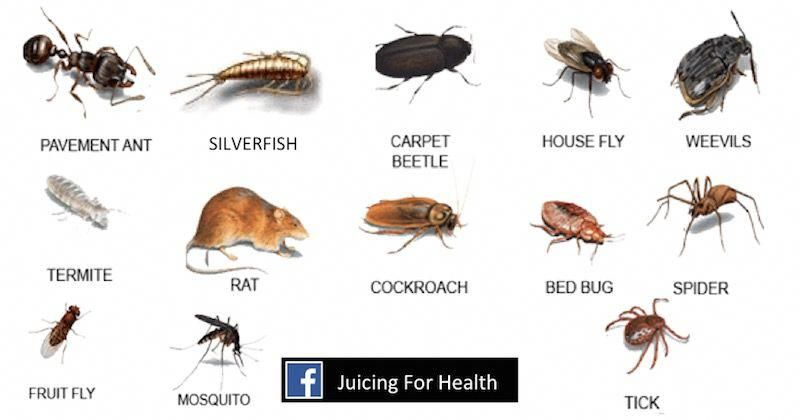 I Am Always Looking For Natural Ways To Keep The Bugs Away From Me My Home And My Garden Instead Of Using Toxic Chemicals In 2020 Mosquito Cockroaches Pests